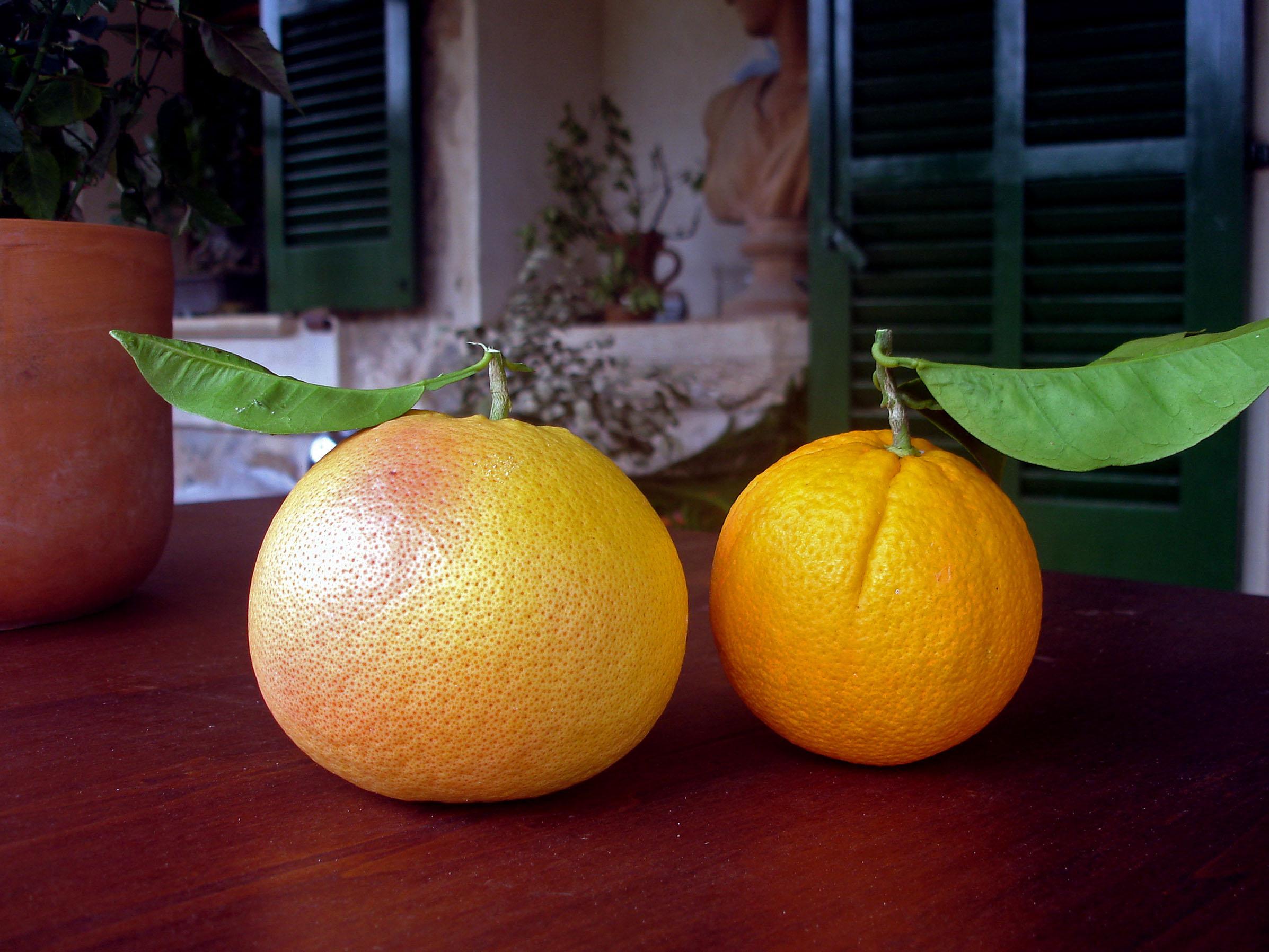 Pomelo&Orange.
